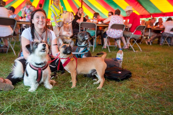 Woman and dogs at music festival